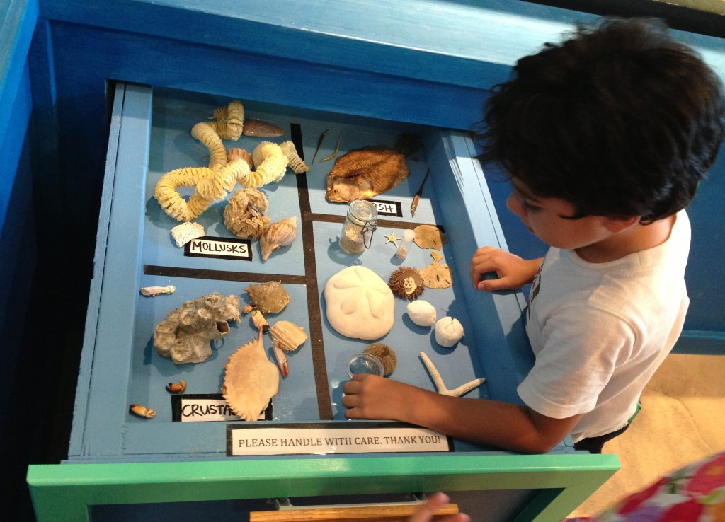 Observing different specimens of mollusks and other sea creatures.