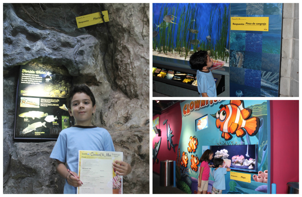 Bilingual scavenger hunt at the Florida Aquarium during Carnaval del Mar. Photos: Paula Bendfeldt-Daiz. All Rights Reserved.