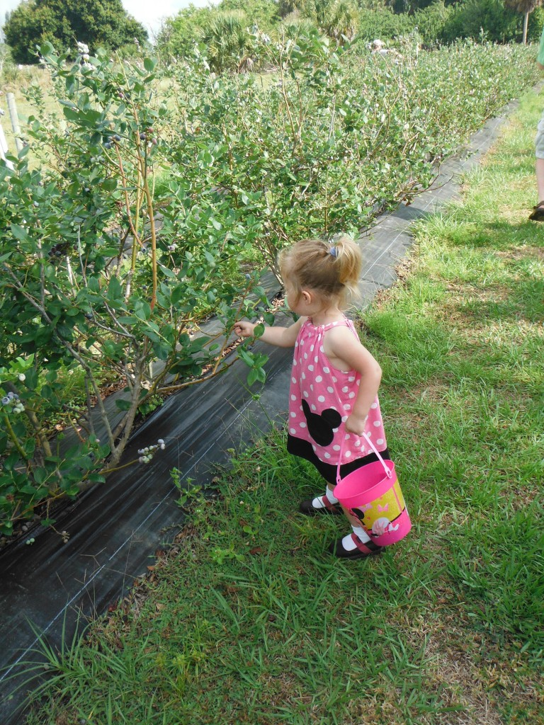 Tiny patrons have the freedom to pick berries at their own pace.
