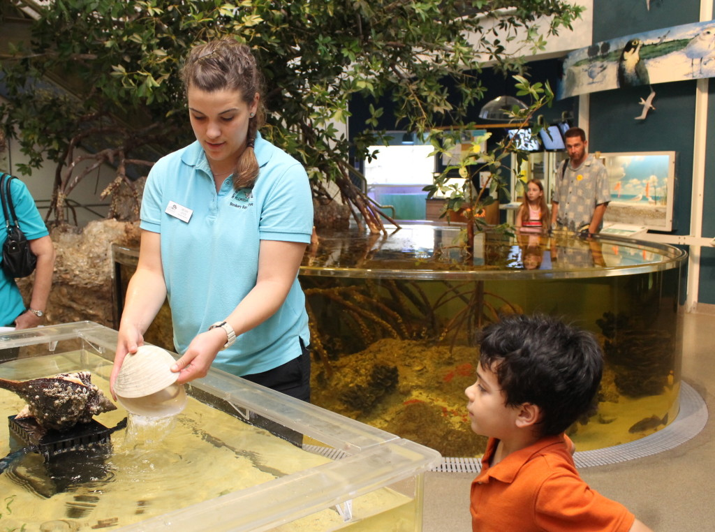 Rookery Bay Touch Tank. Check schedules as the touch tank is not available every day.