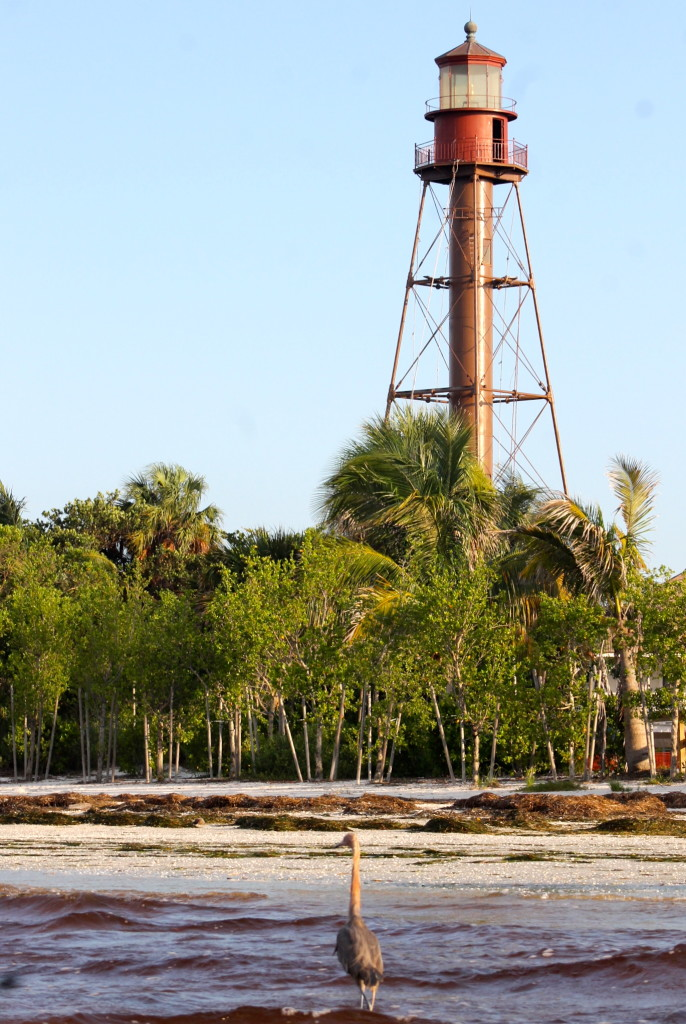 Sanible lighthouse with great blue heron.