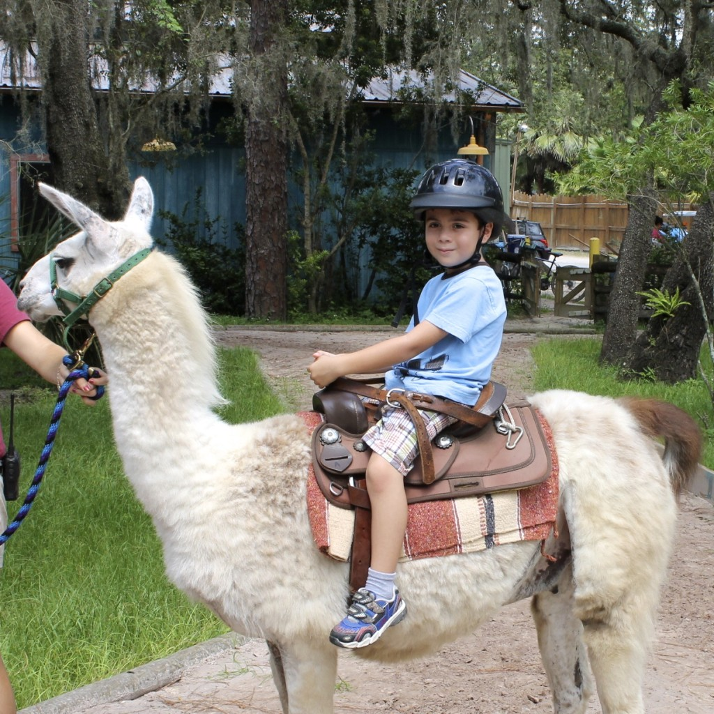 boy riding a llama at Lowry Park zoo