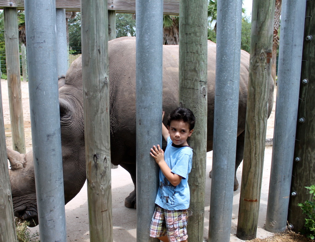 boy touching rhino at Lowry Park Zoo