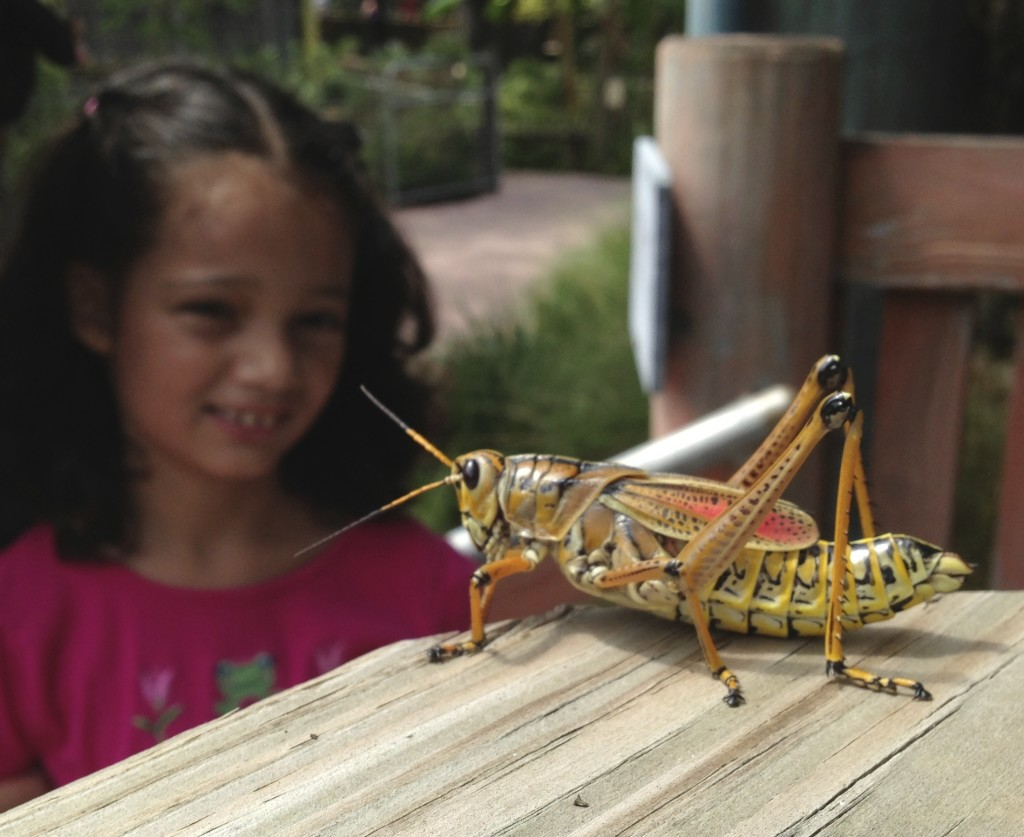 Girl looking at giant Eastrn lubber grasshopper