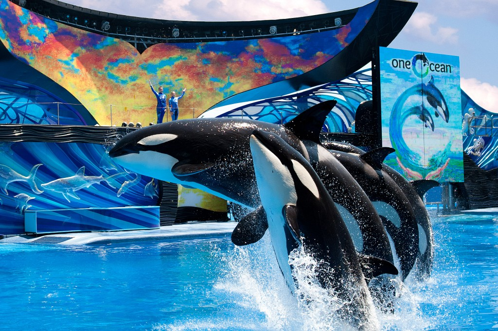 One Ocean show SeaWorld