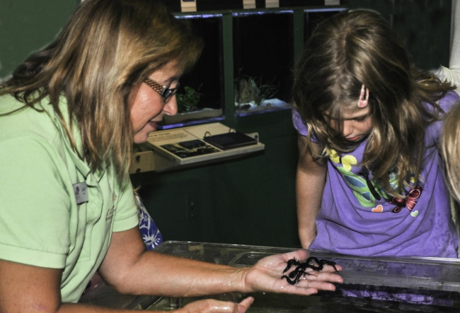 Experience the touch tank on Estuaries Day at Rookery Bay.
