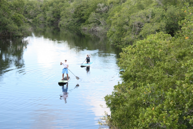 Paddle boarding on Henderson Creek near Rookery Bay.