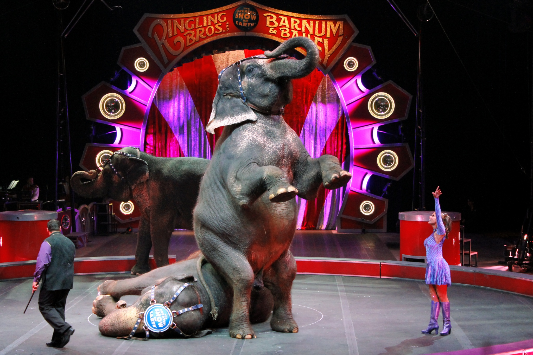 ringling guys Ringling bros and barnum & bailey circus made its way to denver, there   these guys – and gal – walked, danced and rode their way across.