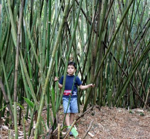 Koreshan State Historic Site bamboo forests
