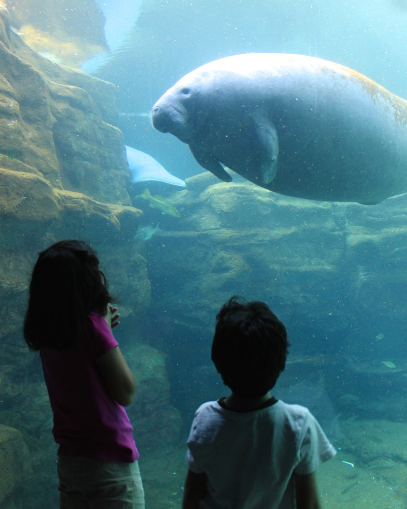 children watching manatee underwater World