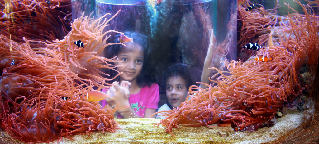 children inside aquarium at SeaWorld