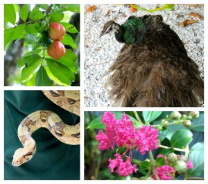 Discovering the real natural Florida at the Everglades Wonder Gardens