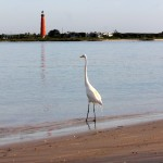 New Smyrna Beach view of the lighthouse from the beach