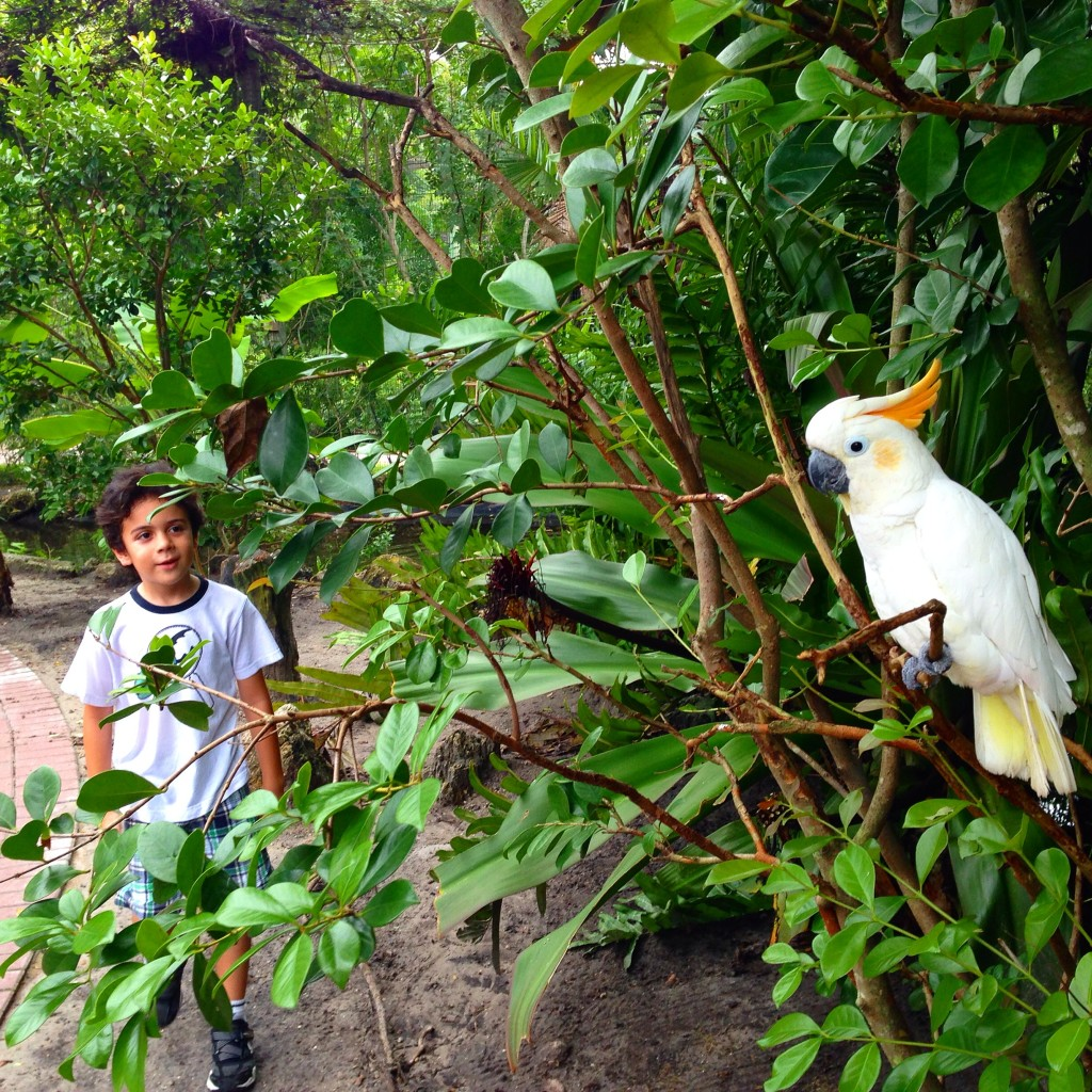 At the Shell Factory aviary