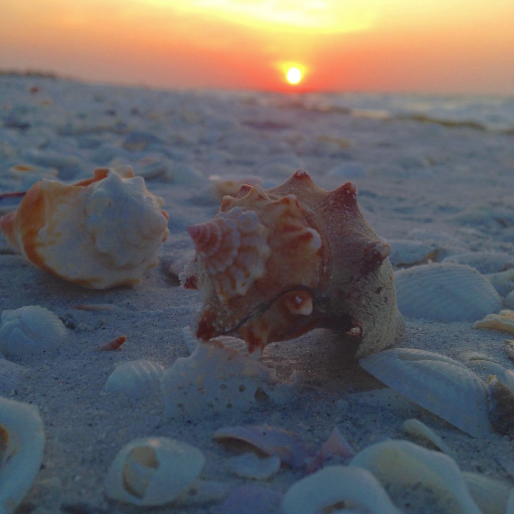 sunrise over seashell filled beach in Sanibel Island