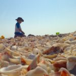 Shelling in Sanibel with kids