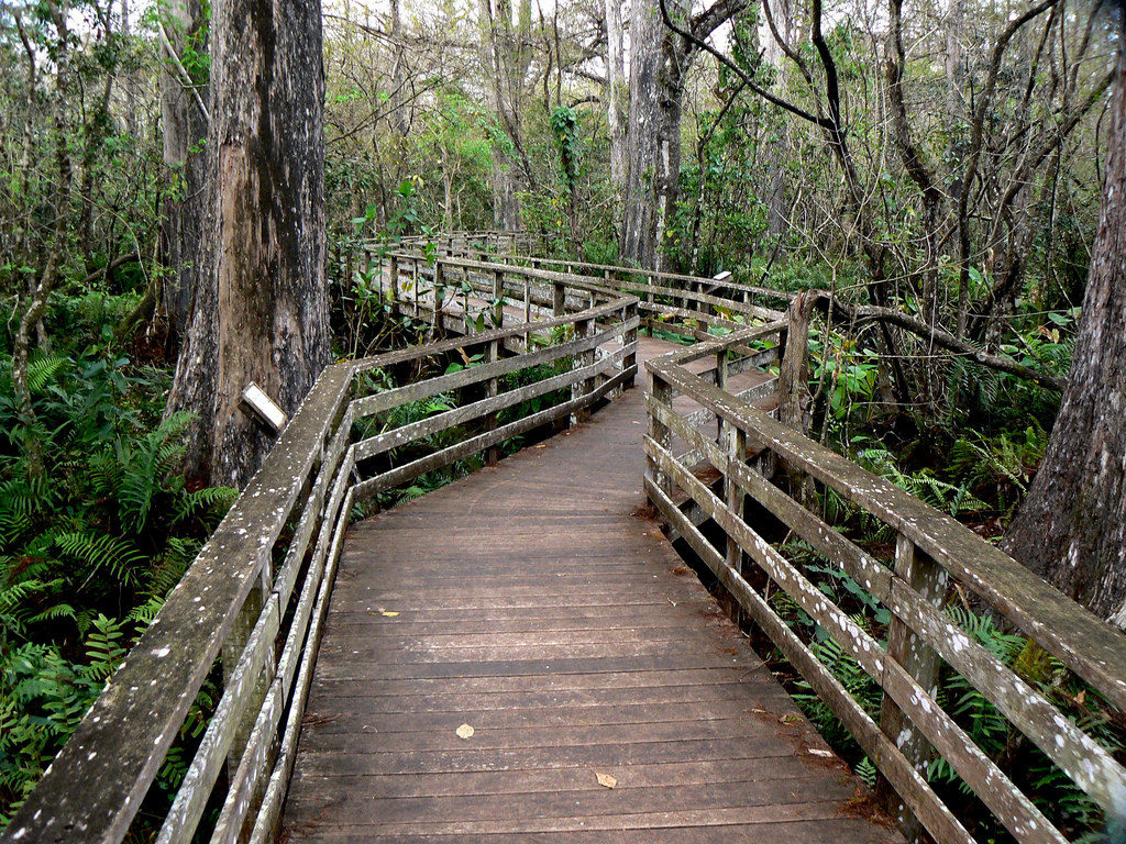 Corkscrew Swamp, Best Nature Hikes for Families in Southwest Florida