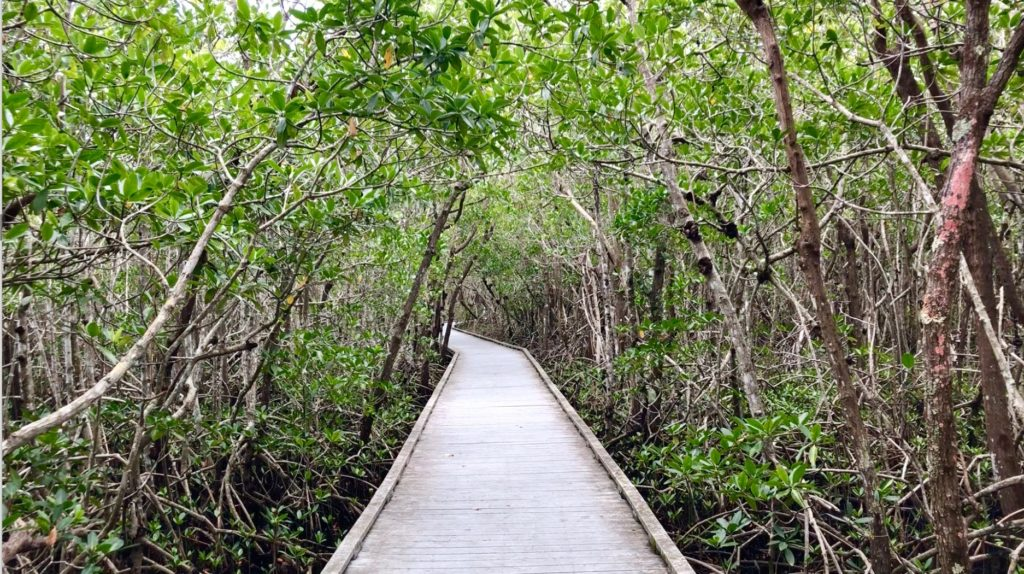Four Mile Cove Preserve, Best Nature Hikes for Families in Southwest Florida