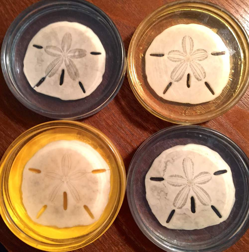Sand Dollar Coasters Crab Magnets Shell crafts to do with kids