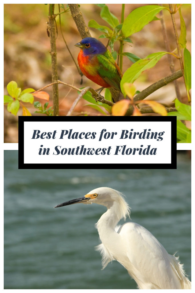 Best places for bird watching in Southwest Florida