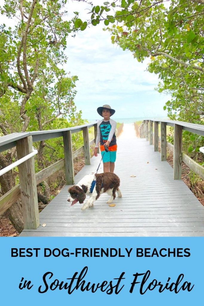 The best dog-friendly beaches in Southwest Florida