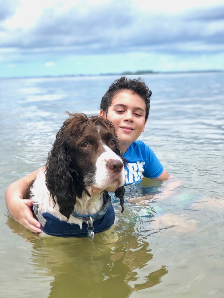 Sanibel causeway beach in Southwest Florida is a dog-friendly beach